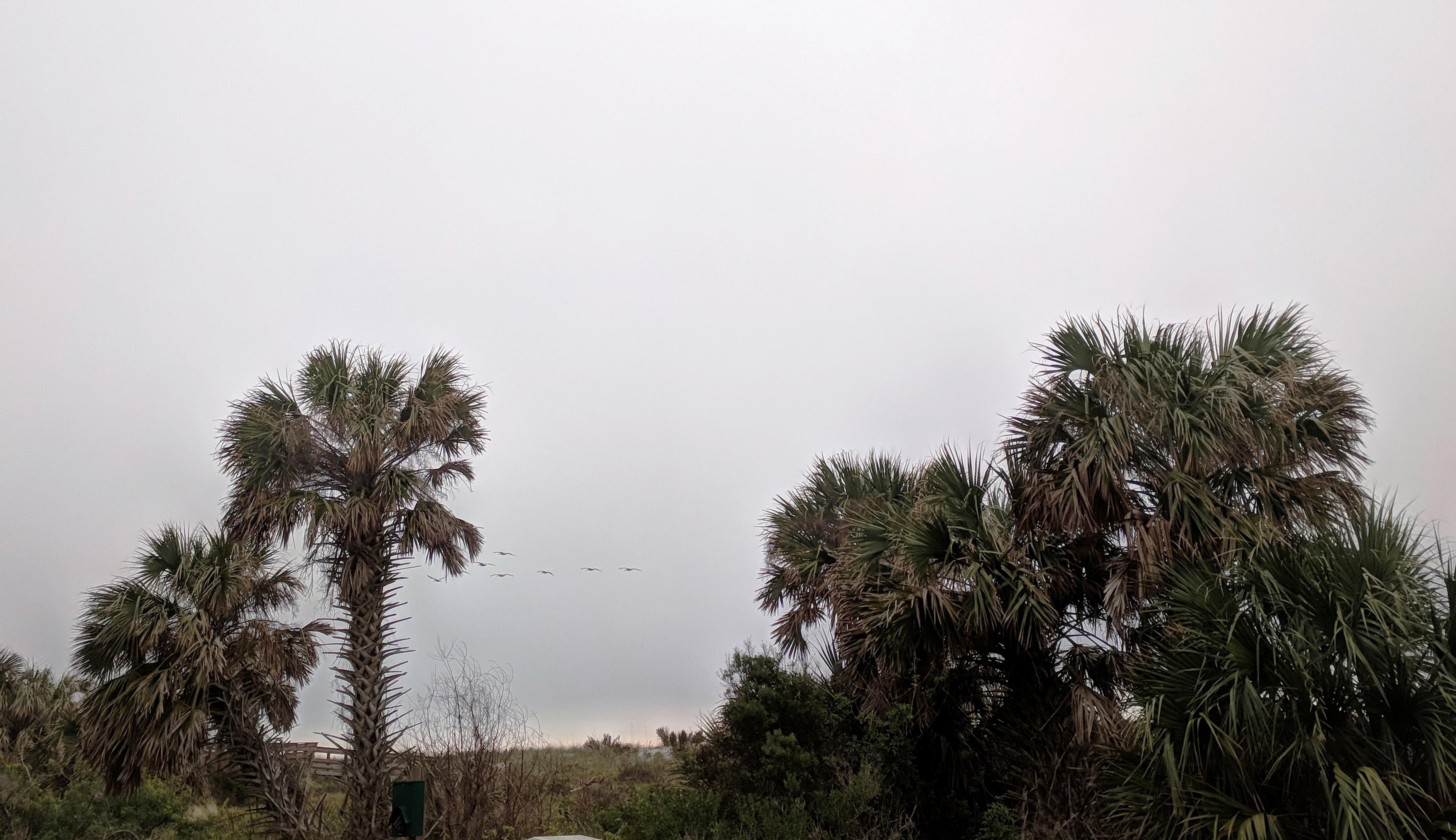 Palm trees, resort